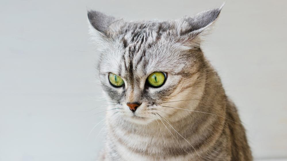 Kā palīdzēt <strong>satrauktam kaķim?</strong>