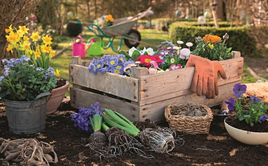 Kā panākt, lai šogad dārzā izcila raža?