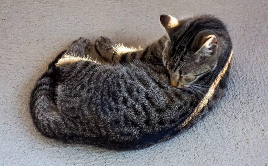 Kāpēc kaķis <strong>laiza kažoku?</strong>