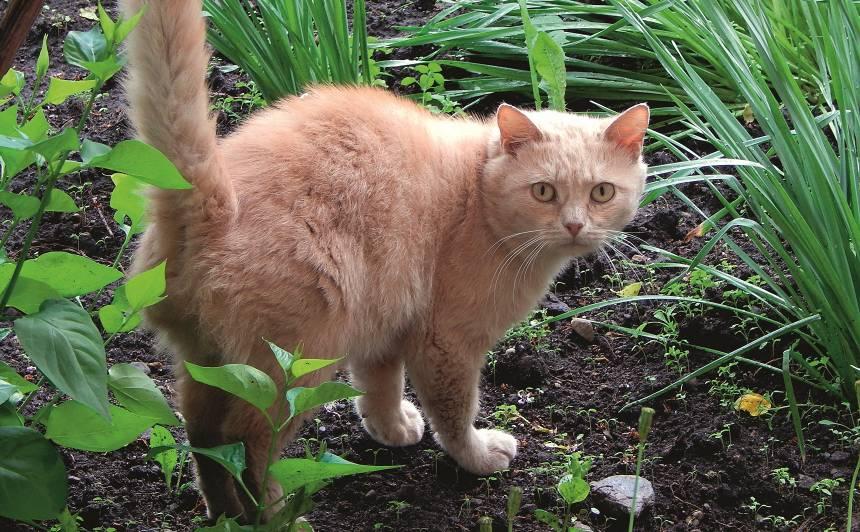 Kā dārzā sadzīvot ar <strong>kaķi?</strong>