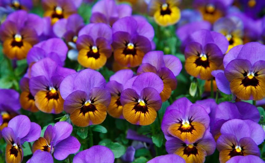 Par <strong>vasaras puķēm</strong> sāc domāt jau tagad!
