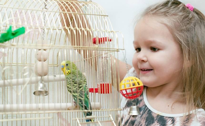 <strong>Mazi dzīvnieciņi mazam bērniņam</strong> — papagailīši un kanārijputniņi