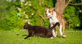 <strong>6 radošas rotaļas</strong>, ko spēlēt ar kaķi un suni