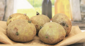 <strong>Kartupeļi, tupeņi, buļbas un rāceņi</strong> – vai vērts audzēt pašam?