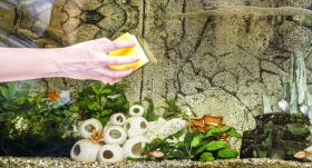 8 svarīgi padomi par <strong>akvārija kopšanu</strong>
