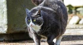Nepiebarojamais <strong>kaķis — bulīmiķis</strong>