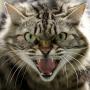 Nemurrājošais nezvērs — kāpēc kaķis kļūst <strong>agresīvs?</strong>