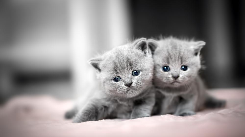 Ko darīt, ja esi palicis kaķēniem <strong>mammas vietā</strong>