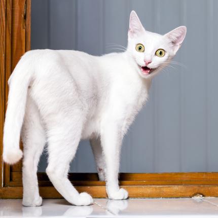 Baldriāni — bīstamās <strong>kaķu <em>narkotikas</em></strong>