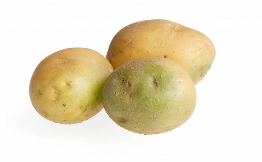 Uzmanīgi – <strong>sazaļojuši kartupeļi</strong>! Apēst, stādīt vai mest ārā?
