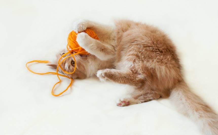 Kāpēc kaķiem patīk <strong>zelēt vilnas izstrādājumus</strong>