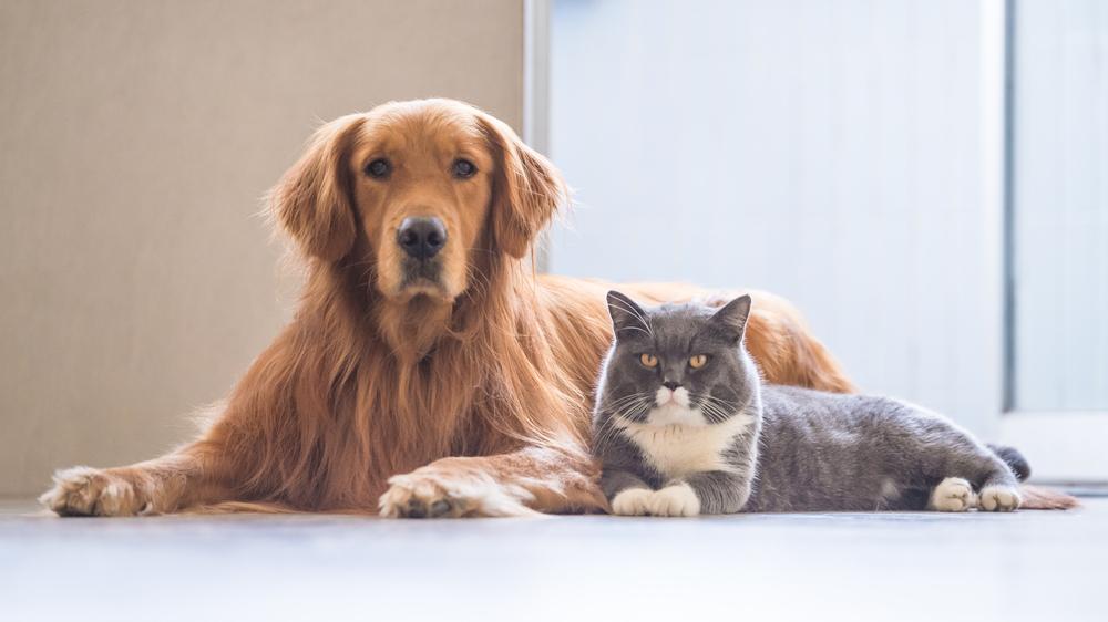 Suns un kaķis. <strong>Naids vai draudzība?</strong>