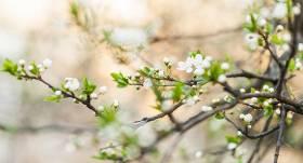 Maija darbi <strong>augļu un ogu dārzā</strong>