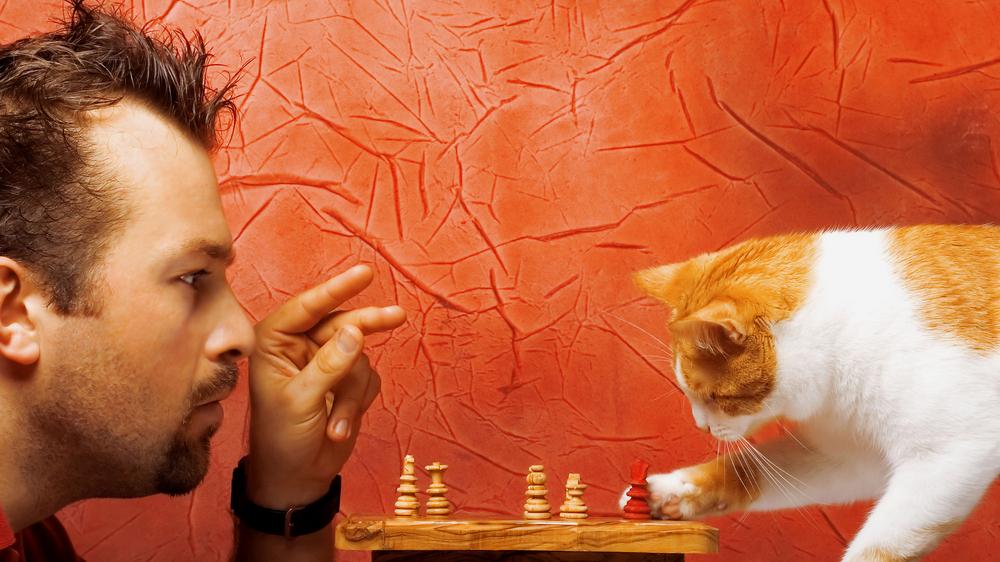 Kaķa <strong>iedzimtā inteliģence</strong> – mīts vai patiesība?