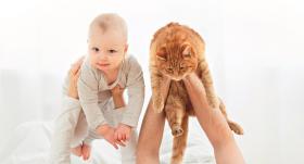 <strong>Vispirms sunīti, tad bērniņu?</strong> Mājdzīvnieks kā ģenerālmēģinājums?