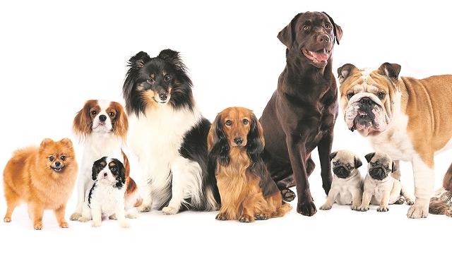 <strong>6 apsvērumi,</strong> kas jāņem vērā, meklējot suni