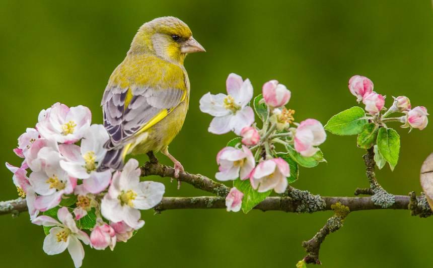 Kā dārzā <strong>ievilināt putnus</strong>