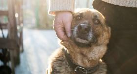 <strong>12 iemesli,</strong> kāpēc adoptēt pieaugušu suni