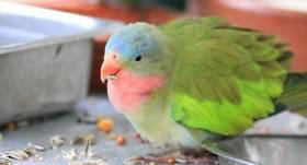<strong>Resnie putni.</strong> Kas rada aptaukošanos spārnaiņiem?