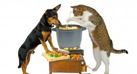 Vai suns var būt <strong>veģetārietis?</strong>