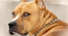 Vai suns var būt <strong>draugs un apsargs vienlaikus?</strong>
