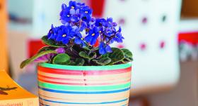 Ieteicamās puķes <strong>bērnistabai</strong>