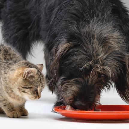 <strong>Suns</strong> izēda kaķim bļodiņu! Kāpēc otra ēdiens šķiet <strong>kārdinošāks?</strong>