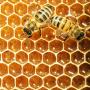 Kā izmantot bišu <em>burvestību</em> — medu? <strong>20 padomi veselībai un skaistumam</strong>