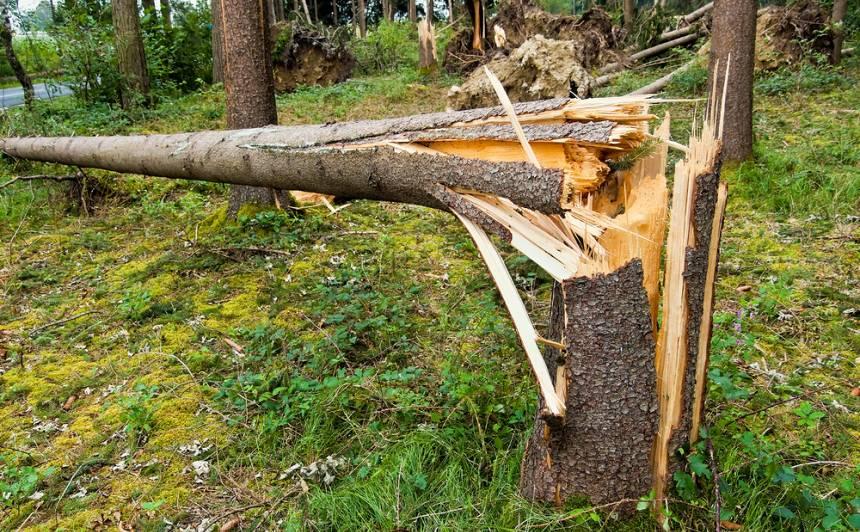 Vētras postījumu dēļ <strong>slēgtas vairākas dabas takas</strong> pie Siguldas un Gaujas Nacionālajā parkā