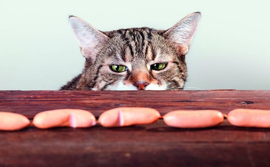 Vai <strong>kaķis</strong> var kļūt par vegānu?