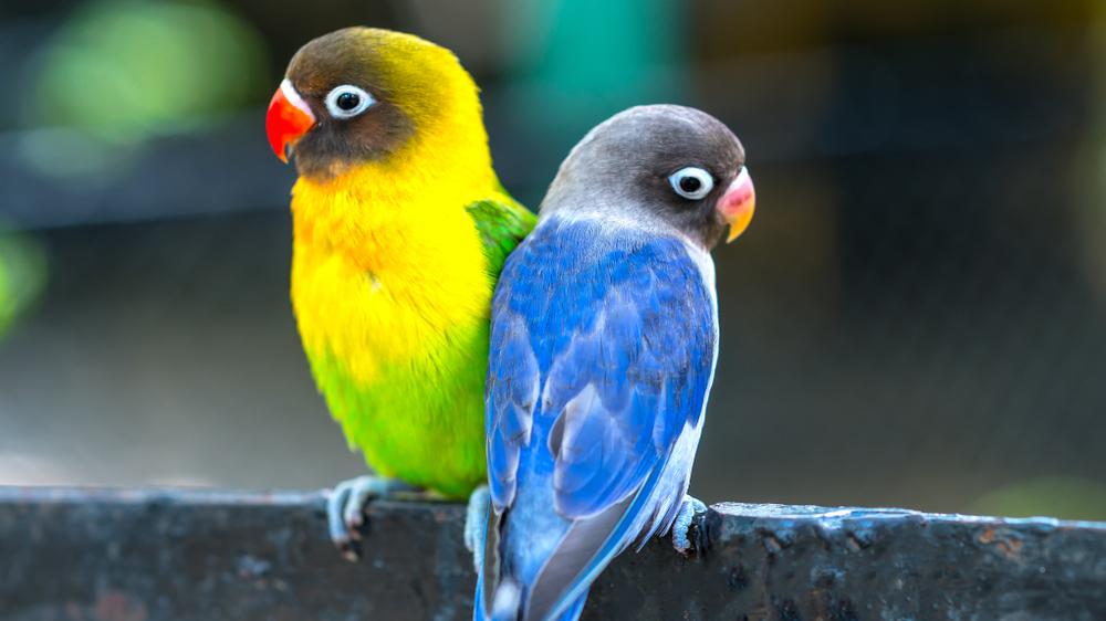 Populārākie putnu vārdi. <strong>TOP 100</strong>