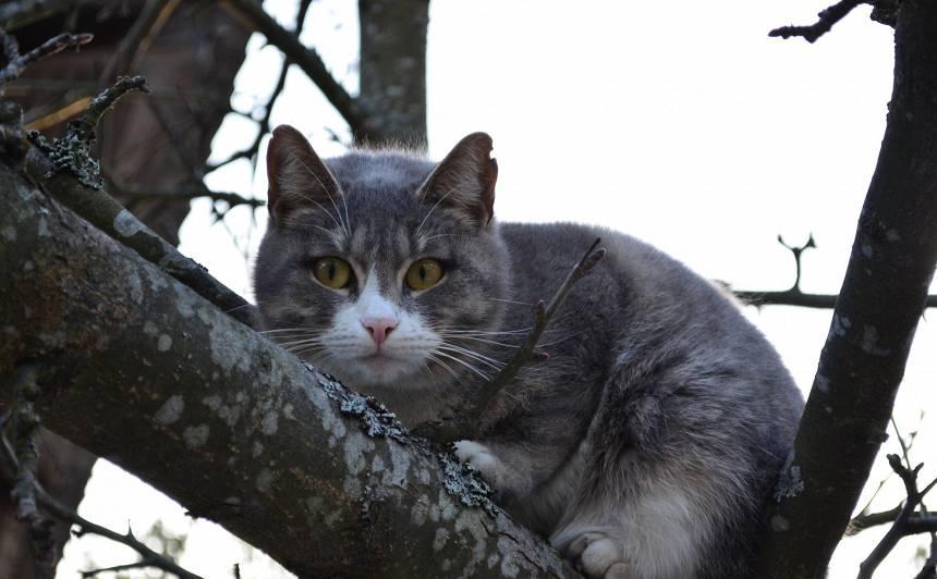 Glābēji izglābj <strong>trīs dienas kokā nosēdējušu kaķi</strong>