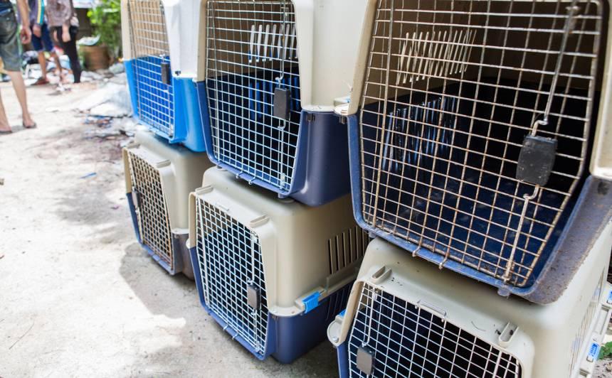 (VIDEO) Pārdaugavā kādā dzīvoklī kārtības sargi izņem <strong>58 suņus</strong>