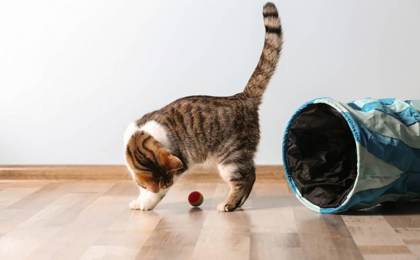 TESTS: <strong>Cik apķērīgs</strong> ir tavs kaķis!