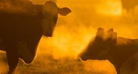 Mājdzīvnieki <strong>vasaras saulgriežos</strong>