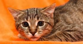 Arī kaķiem mēdz būt <strong>fobijas!</strong>
