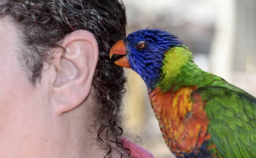 Ko putns vēlas tev <strong>pateikt</strong>. Spārnaiņu ķermeņa valoda