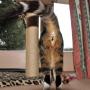 Kāpēc kaķis <strong>nemazgā sev dibenu</strong>