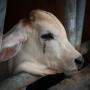 Vai dzīvnieki spēj <strong>raudāt?</strong>