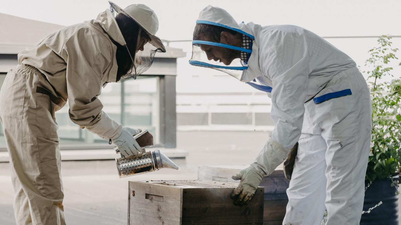 Pārsteidzoši foto: <strong>bišu saimes uz lielveikala jumta Rīgā</strong>