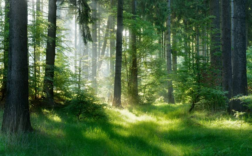 Arī <strong>mežam</strong> vajag inventerizāciju!
