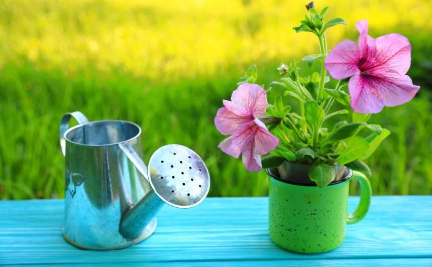 Lai uzzied puķes <strong>krūzītē!</strong>