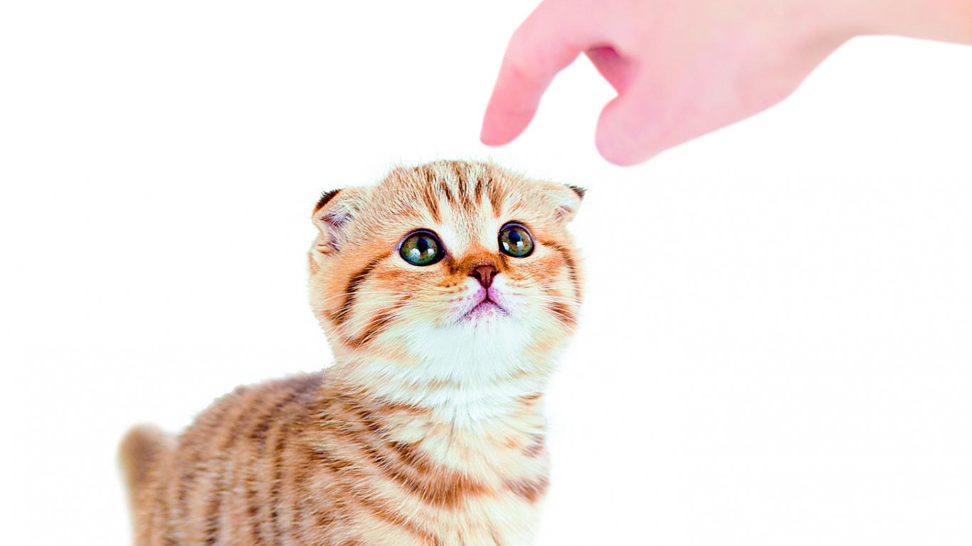 Kā izveidot <strong>saikni ar kaķi</strong>