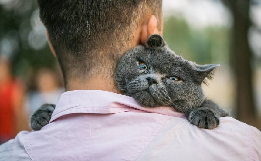 Kaķu maģija. <strong>Kāpēc un kad kaķis ierodas tieši pie jums</strong>