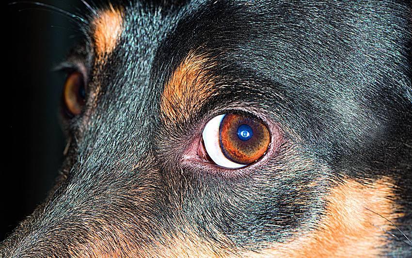 Sargi <strong>suņa acis!</strong>