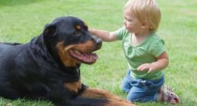 Ja mājās ir mazulis un suns. <strong>10 zelta likumi, lai visiem klātos labi</strong>