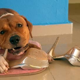 <strong>Suns grauž visu pēc kārtas.</strong> Kā viņu atradināt no šā netikuma?