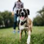 <strong>22 veidi,</strong> kā suņa kompānija uzlabo saimnieka dzīvi