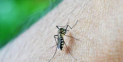 Kā panākt, lai <strong>odi nelido</strong> iekšā mājā?