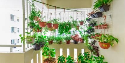Kā iekārtot savu <strong>urbāno dārzu?</strong>